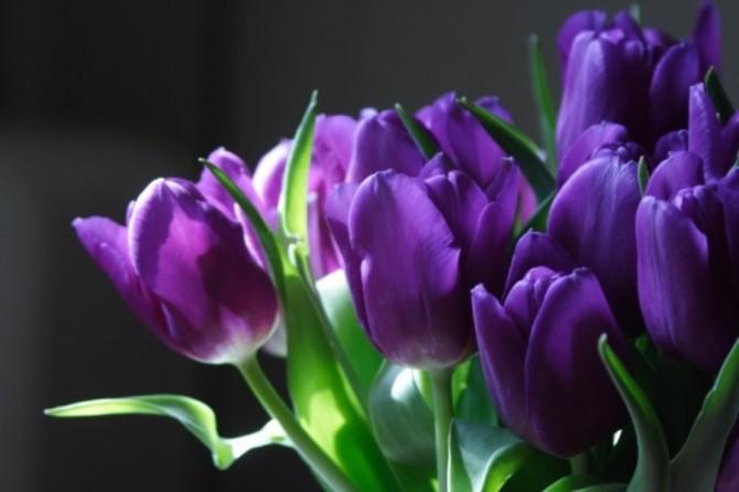 Sta arrivando la Primavera… risveglia il tuo benessere!