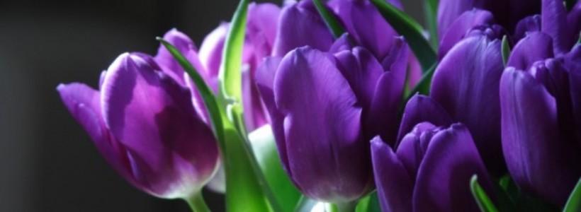 C'è profumo di primavera nell'aria…risvegliamo i nostri sensi!