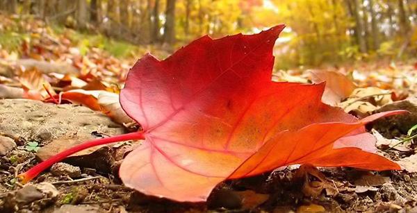 Profumo d'autunno…