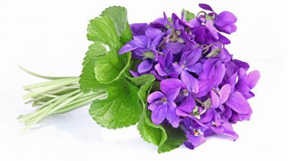 Speciale Primavera: 3 pacchetti favolosi e una super promozione!