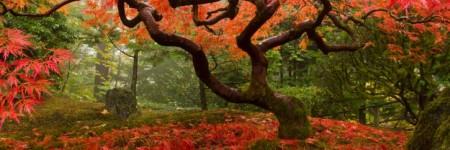 Autunno… un tripudio di emozioni, profumi e colori!!!