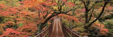 Magia d'autunno…