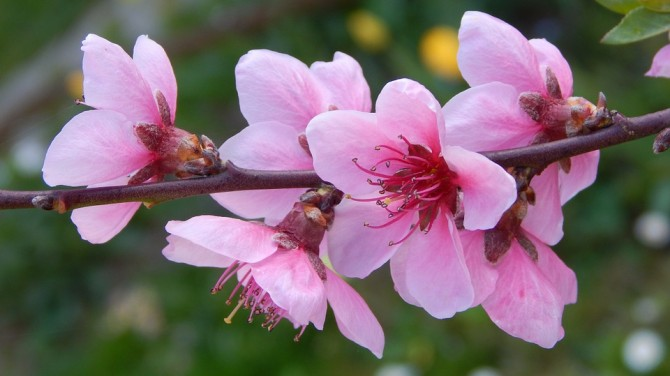 È primavera… ricarichiamo il nostro corpo con l'energia vitale dell'universo!